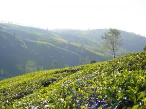Sri Lanka thee kopie